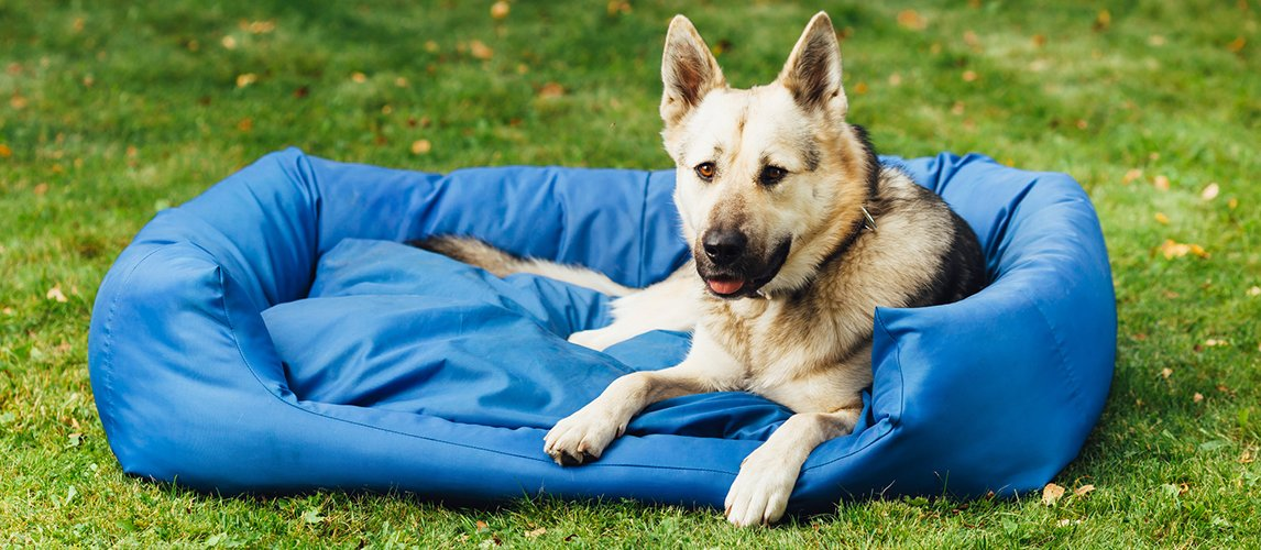 Dog Cooling Pad Reviews Best Dog Cooling Pads Of 2019