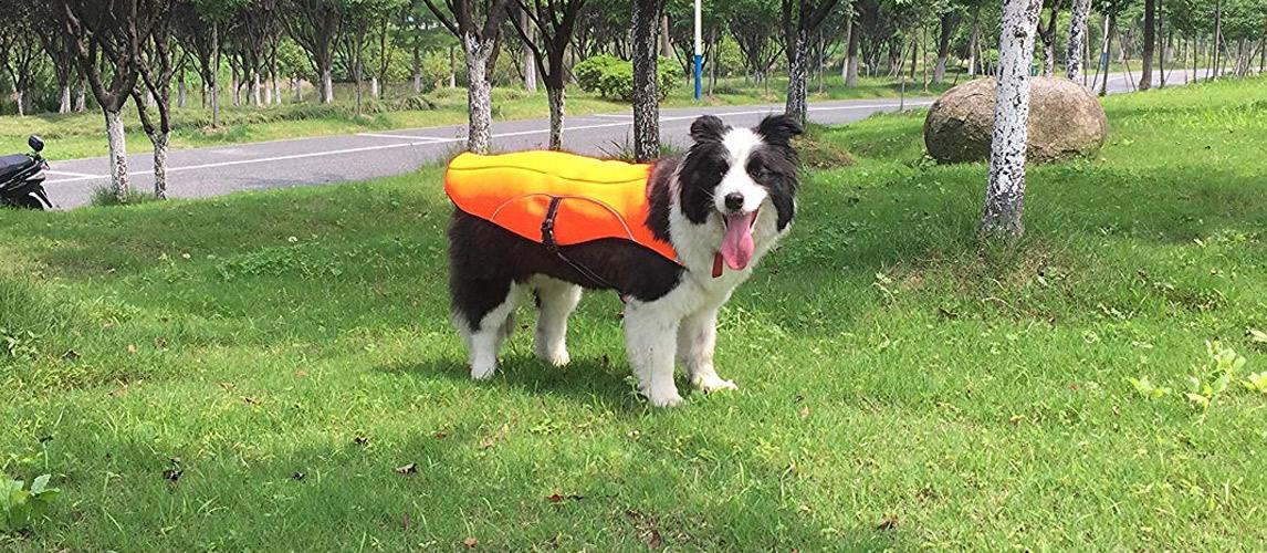 Best-Dog-Cooling-Vests