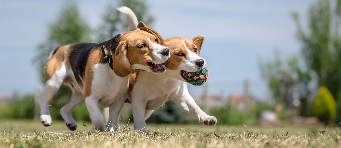 Best-Dog-Joint-Supplements
