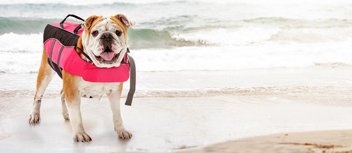 Best-Dog-Life-Jacket