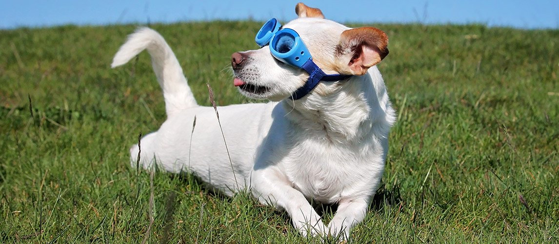 Best-Dog-Sunglasses-and-Goggles