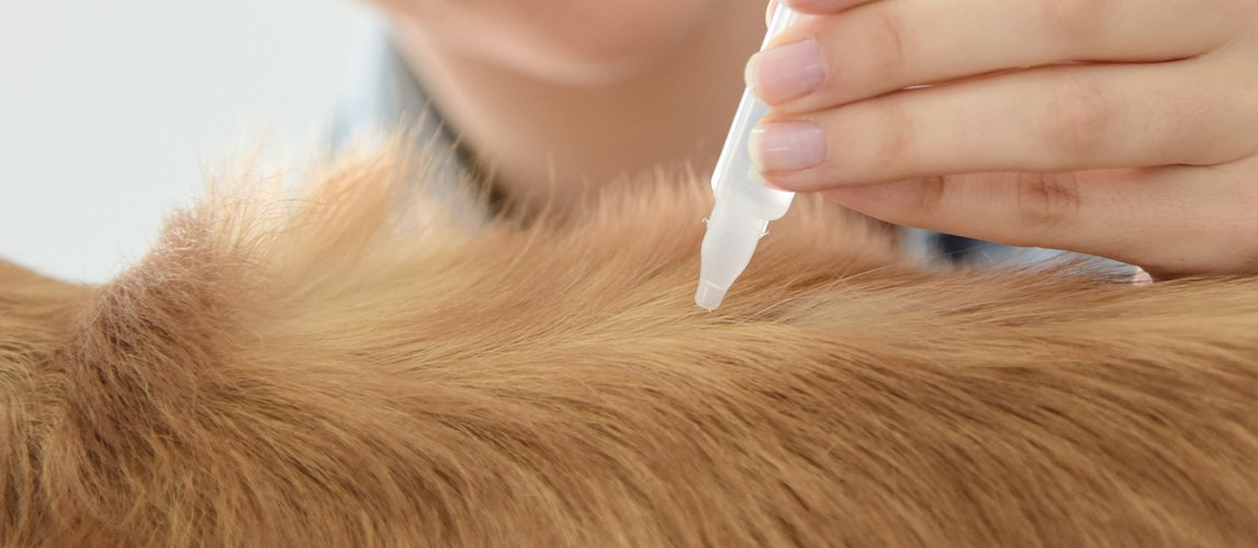 Best-Flea-Treatment-for-Dogs