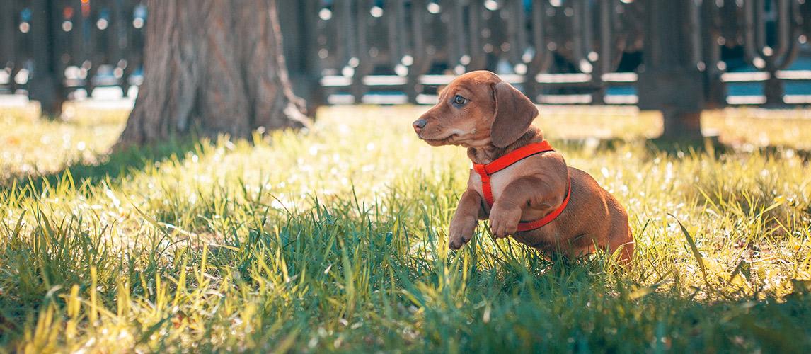 Best-Puppy-Harness