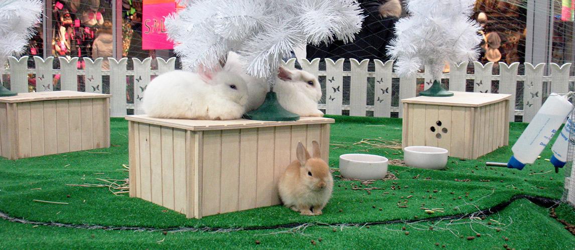 Best-Rabbit-Toys-1
