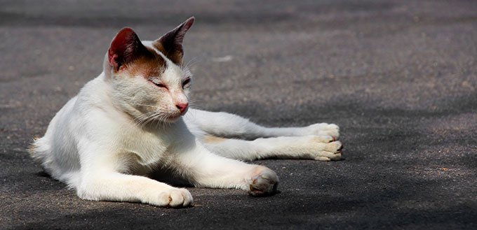 Cat resting on the street