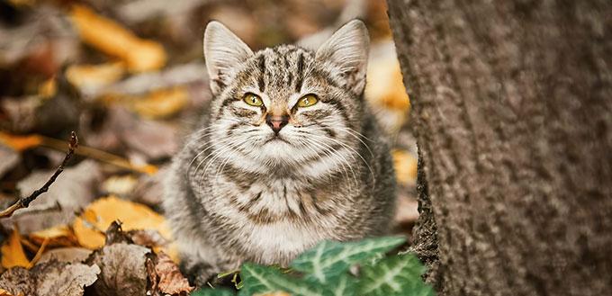 Kitten lying near the tree