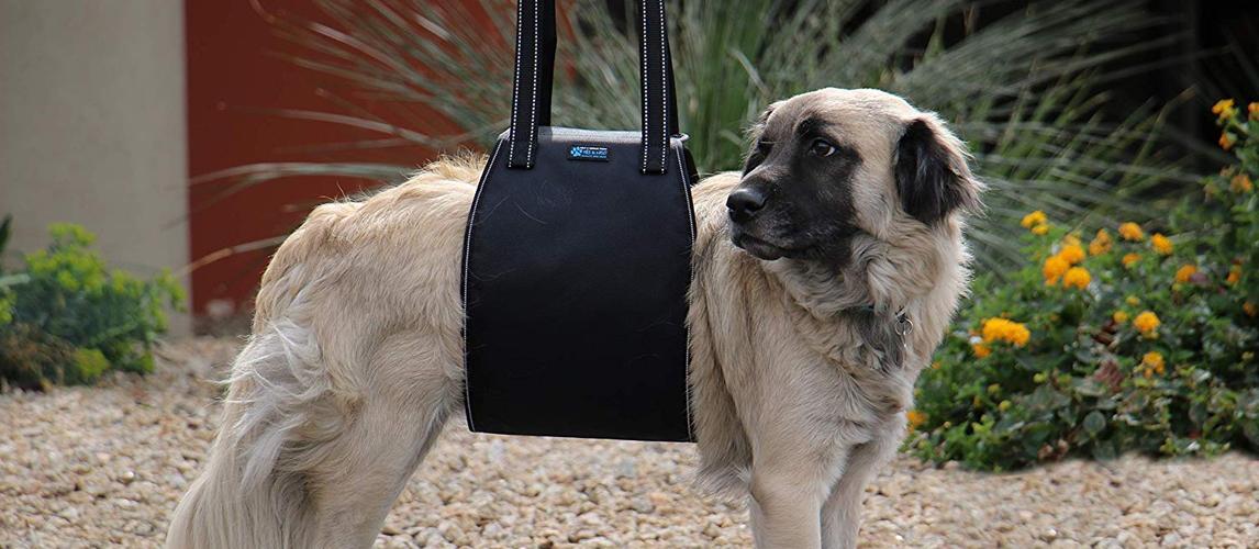 best-dog-lift-harness