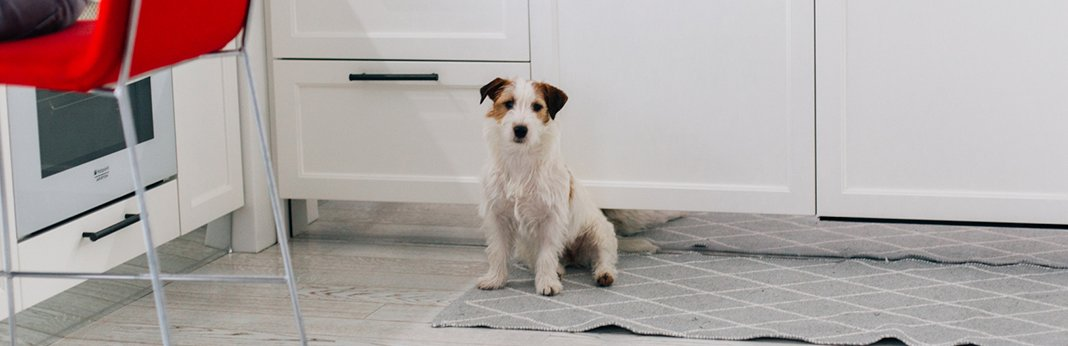 household-cleaning-products-that-are-not-safe-for-dogs