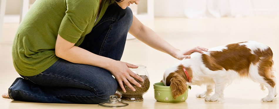 woman feeding puppy