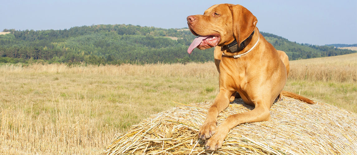 Best-GPS-Trackers-for-Dogs