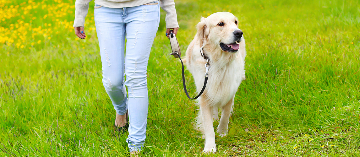 Best-Retractable-Dog-Leashes