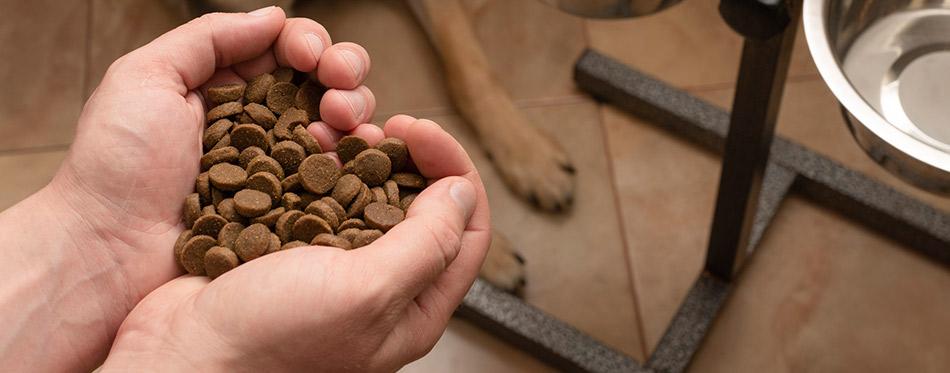 Hands holding dog food