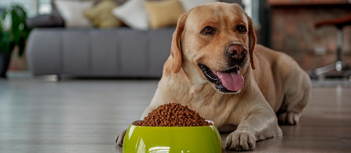 Iams-Dog-Food-Review
