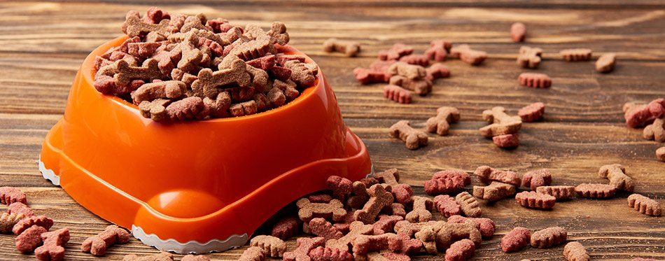 Plastic bowl with dog food