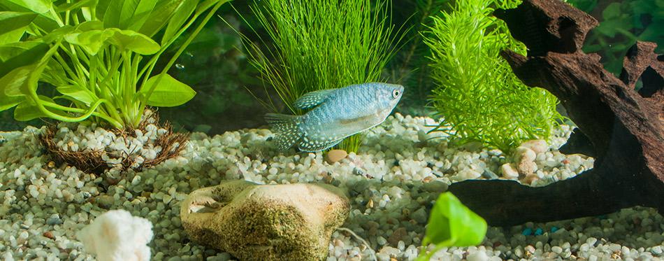 Aquarium with fish plants and rocks