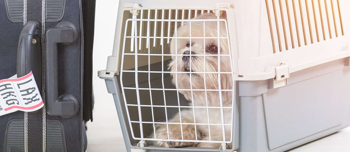 Best-Airline-Approved-Pet-Carrier