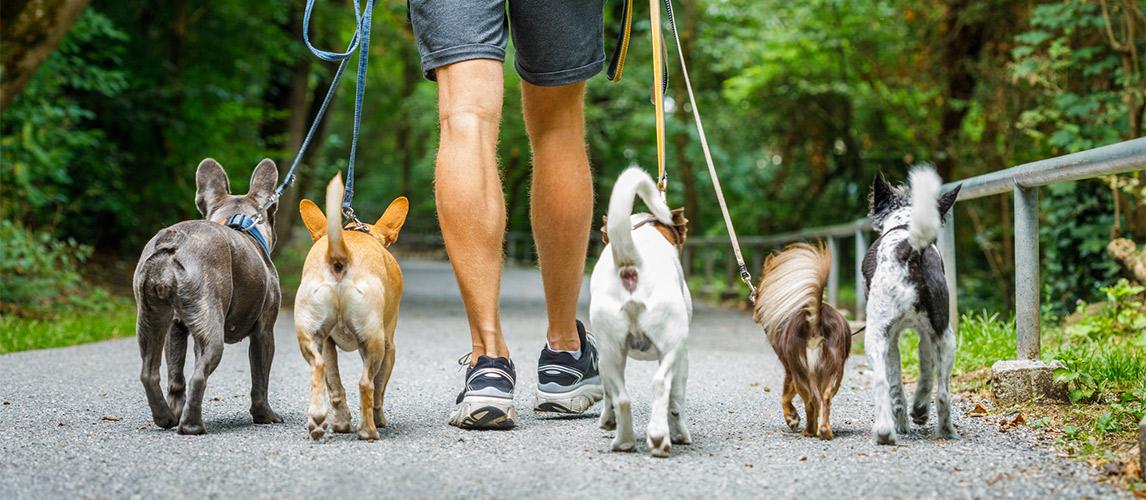 Best-Dog-Walking-App