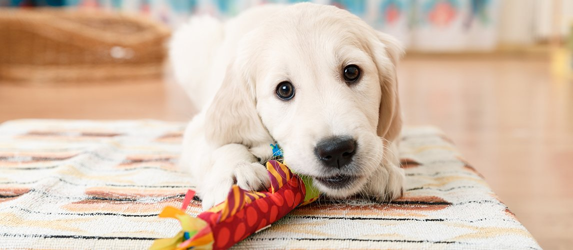 Best-Interactive-Dog-Toys