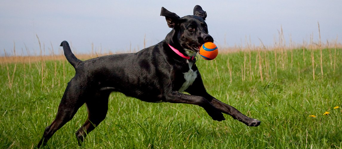 Best-Probiotics-for-Dogs