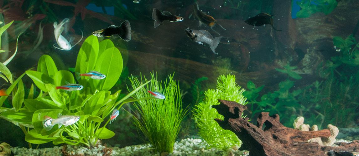 Best-UV-Sterilizer-for-Aquarium