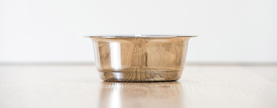 Cat water bowl on wooden floor