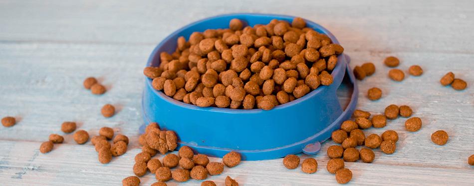 Dry cat food in blue bowl