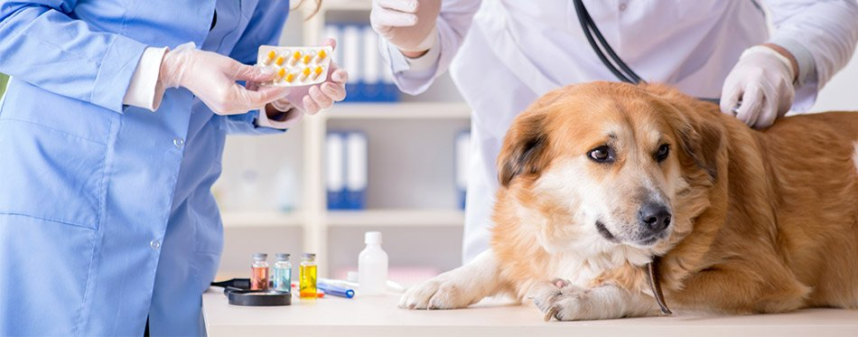 Giving pills to a dog