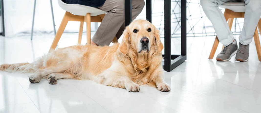How to Put Weight on a Dog: Healthy Weight Gain Tips