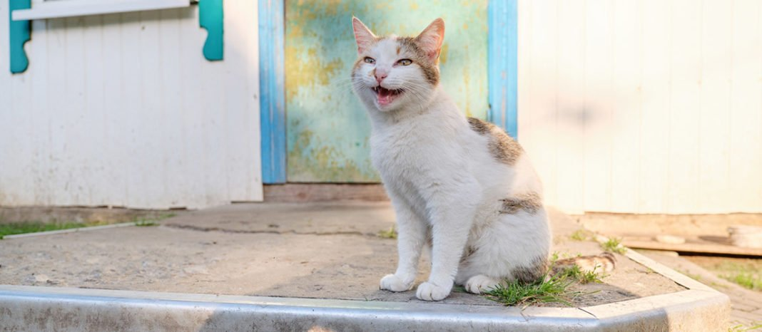 Night Calling: Why Do Cats Meow at Night