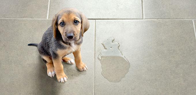 Puppy sitting near wet spot