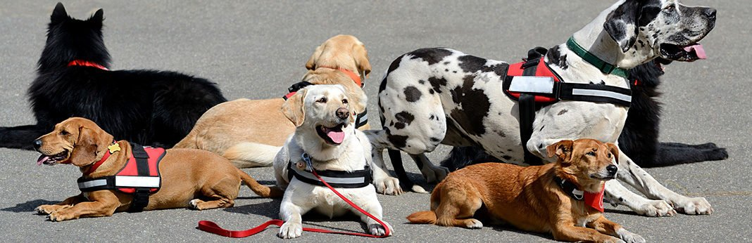 what is a therapy dog definition and benefits