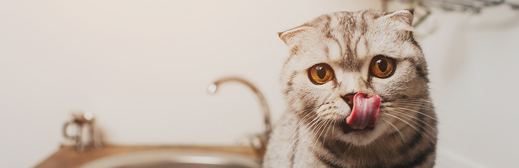 Why-Are-Cats-Noses-Wet