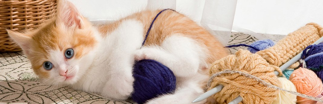 Why-Do-Cats-Like-String1