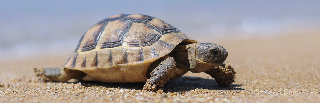 Why Do Turtles Live so Long?