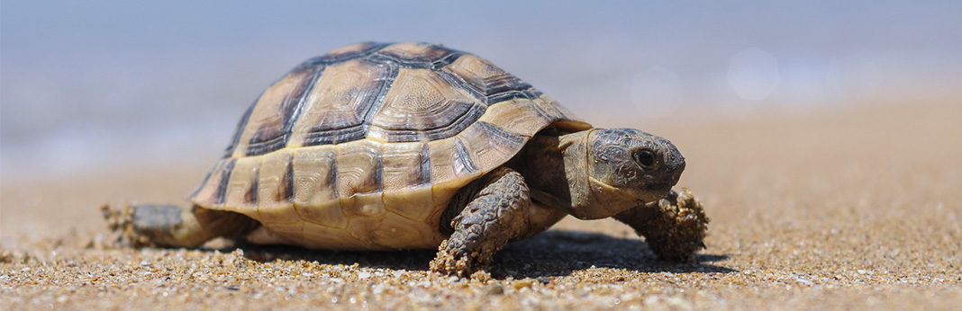 Why-Do-Turtles-Live-so-Long