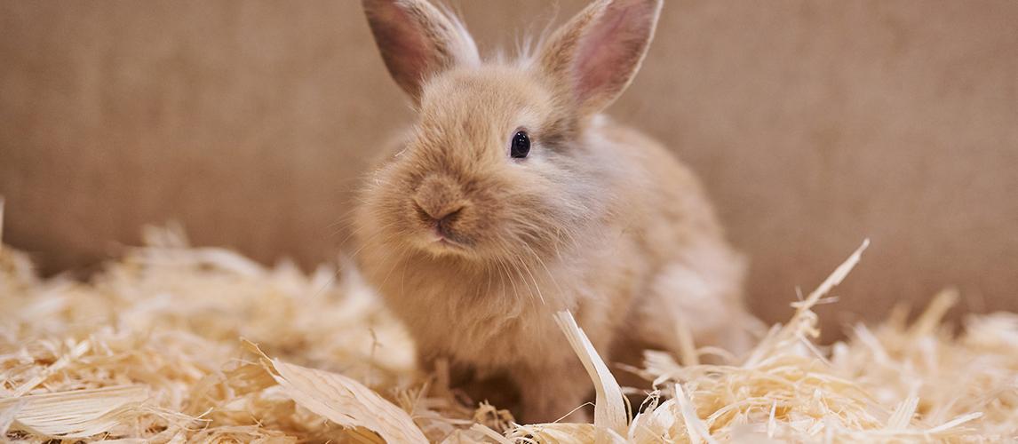 best-litter-for-rabbits