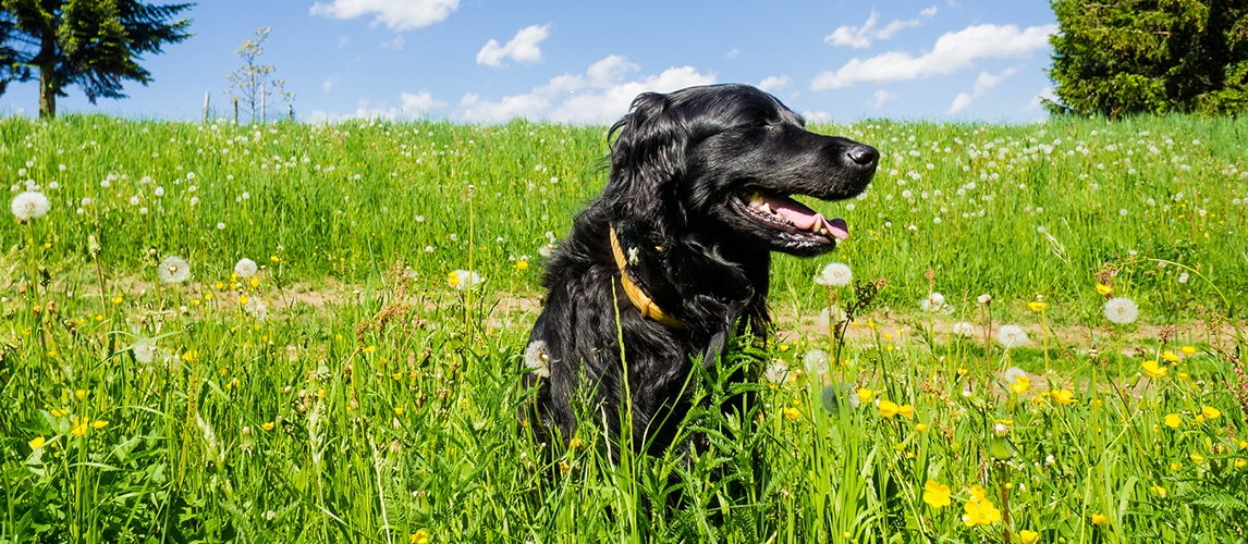best-perfume-and-cologne-for-dogs
