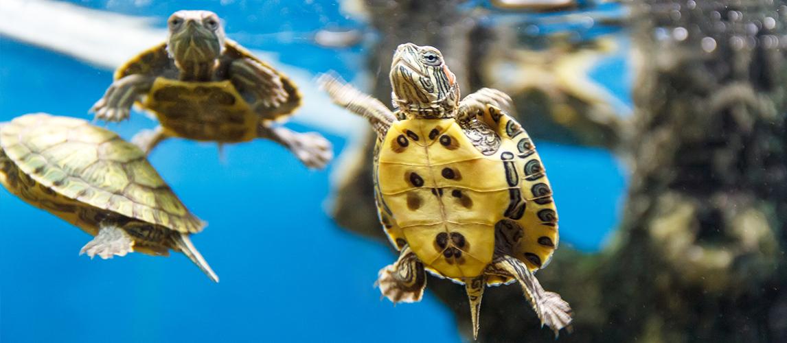 best-turtle-tank-heater