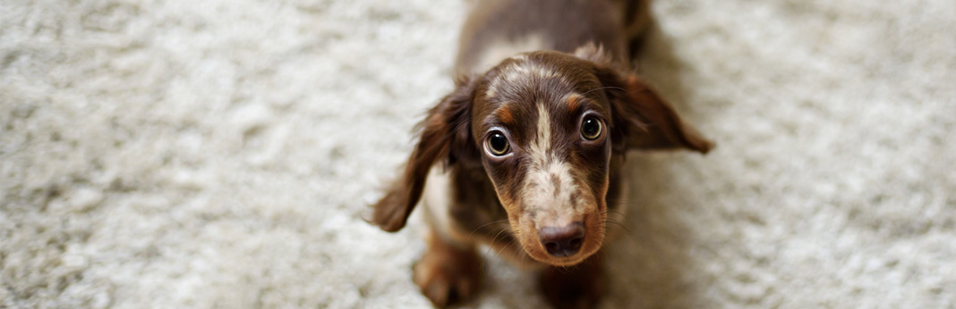 blood-in-dog-stool-should-i-worry-if-my-dog-has-bloody-diarrhea