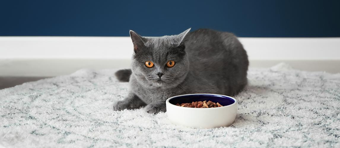 blue-buffalo-cat-food-review