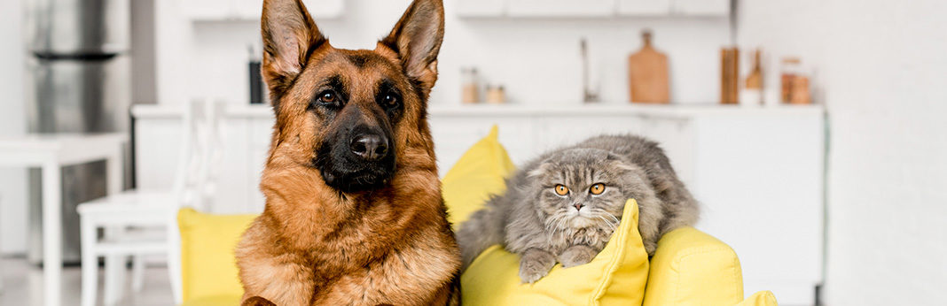 how to introduce dogs to cats