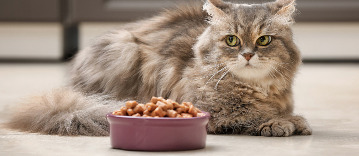 nulo-cat-food-review