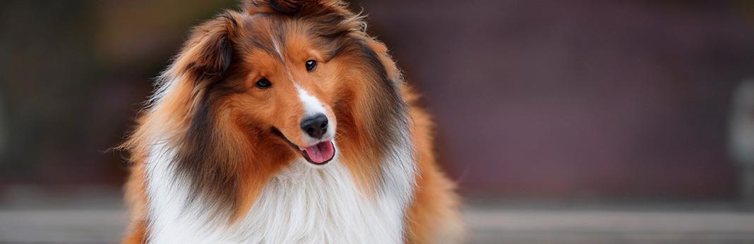 why-do-dogs-tilt-their-heads