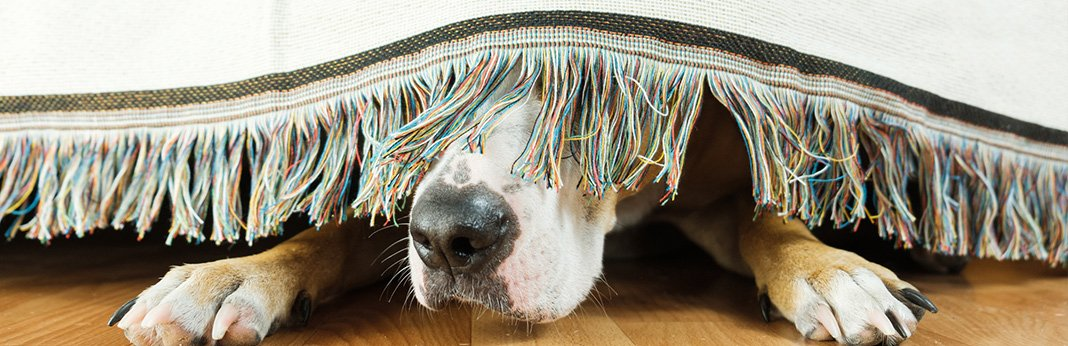 5-reasons-why-your-dog-is-hiding