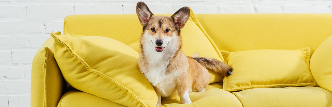 6 Tips to Keep Dog Off Couch