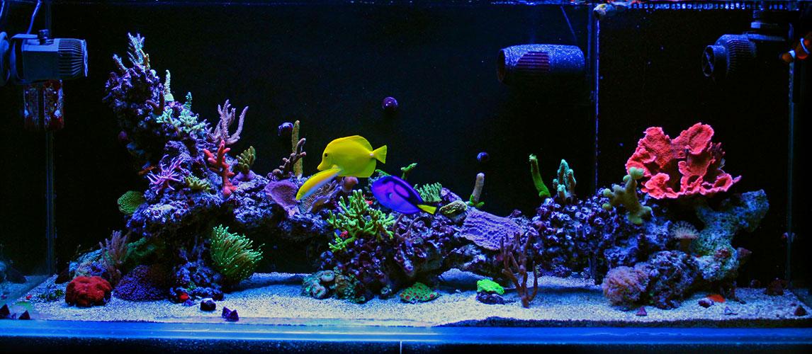 Best-Aquarium-Powerheads