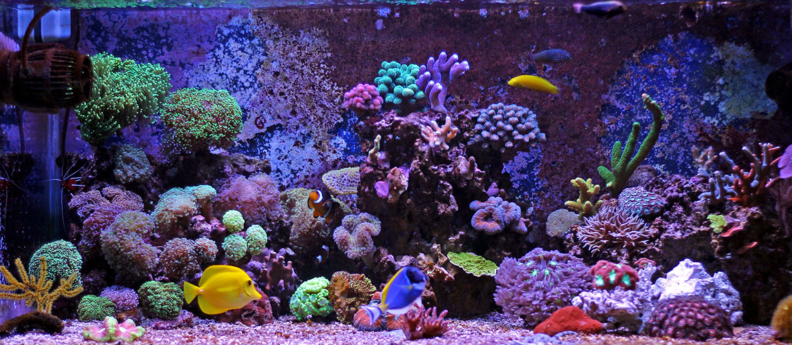 Best-Aquarium-Sand