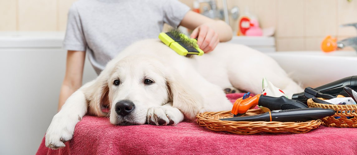 The Best Brushes For Short Hair Dogs Review In 2020 My Pet Needs That