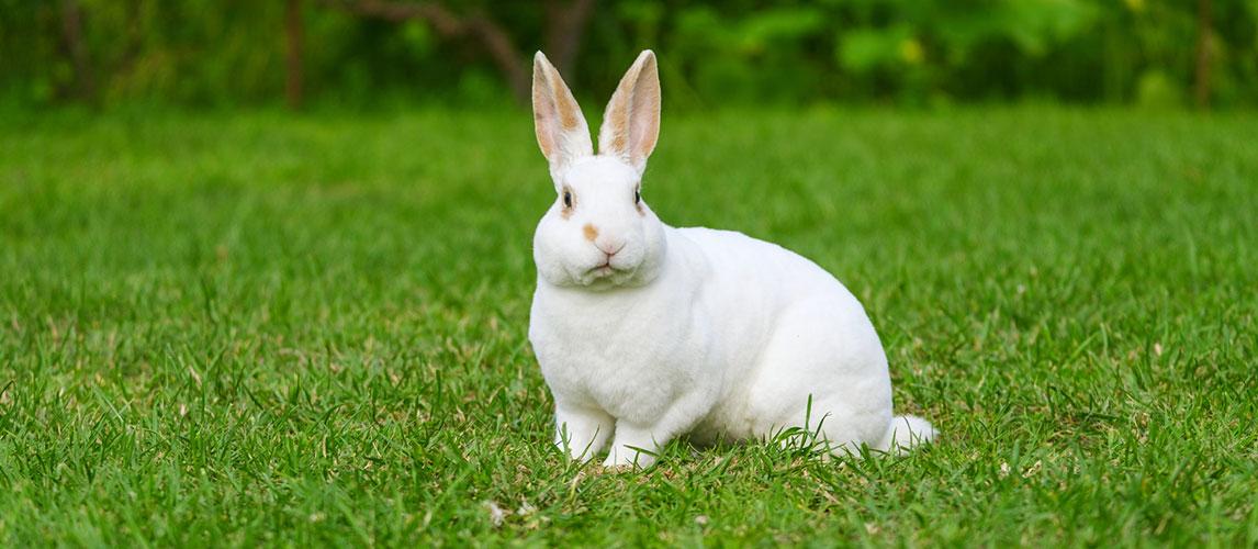 Best-Rabbit-Food