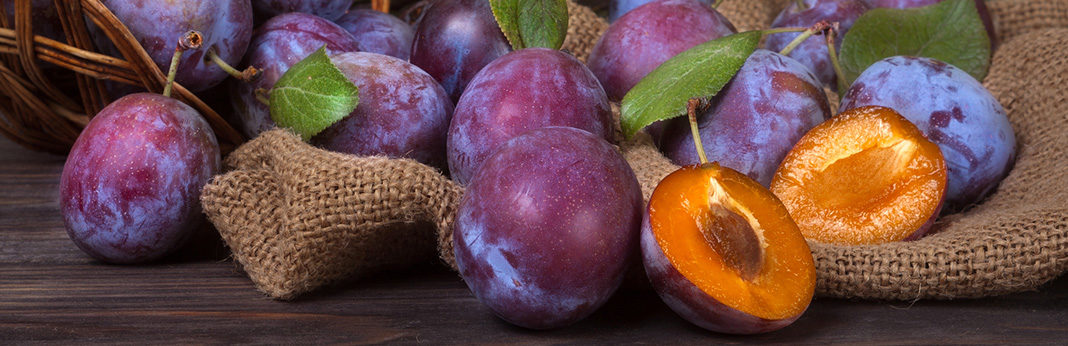 Can Dogs Eat Plums?: Why You Should Be Cautious About Feeding This Fruit